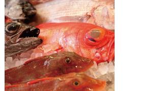 HP用鮮魚画像